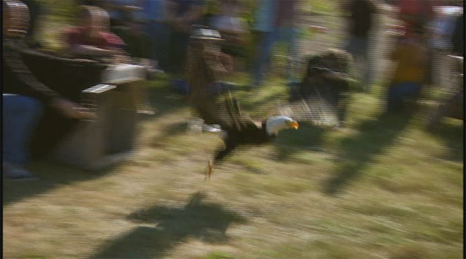 Eagle released back into wild (1)