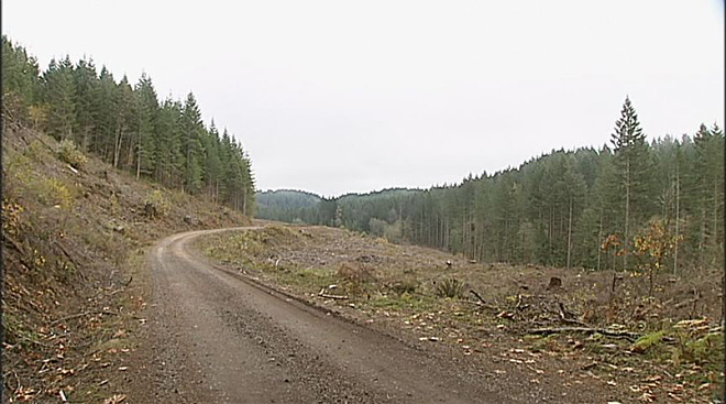 Ecological logging