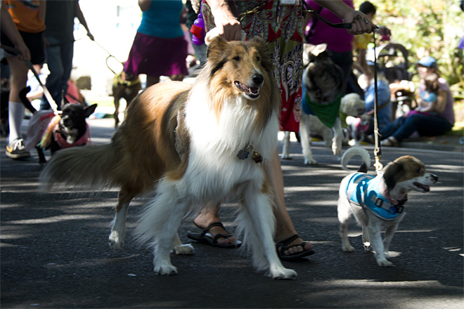 Eugene Celebration Pet Parade - Photo by Tristan Fortsch 04