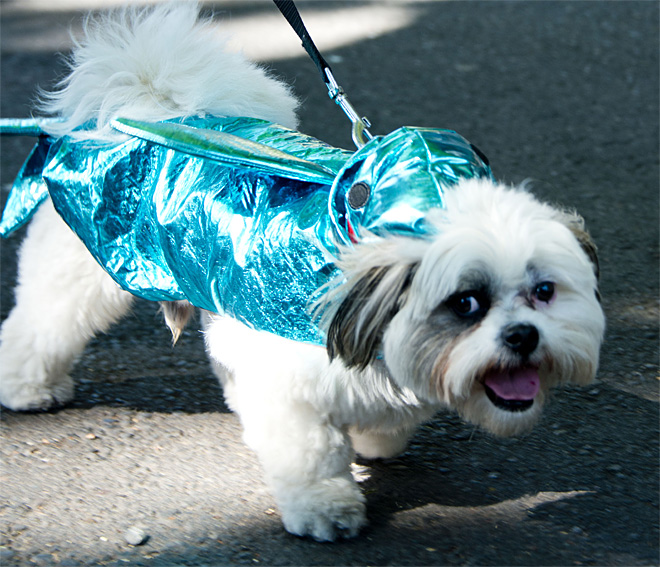 Eugene Celebration Pet Parade - Photo by Tristan Fortsch 22