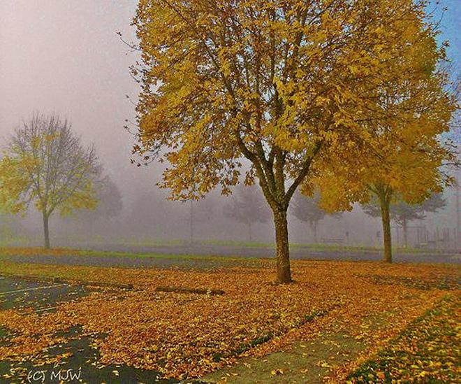 Foggy Autumn Morning at Bob Artz Park - photomike68