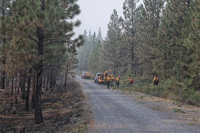 Forest crew chipping ground fuels along roadway - Credit_Tom Iraci.jpeg