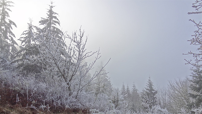 Freezing fog on Ridgeline Trail on January 22 2013 (13)