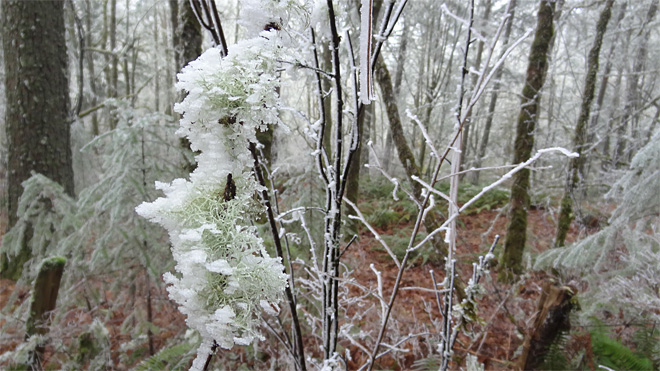 Freezing fog on Ridgeline Trail on January 22 2013 (16)