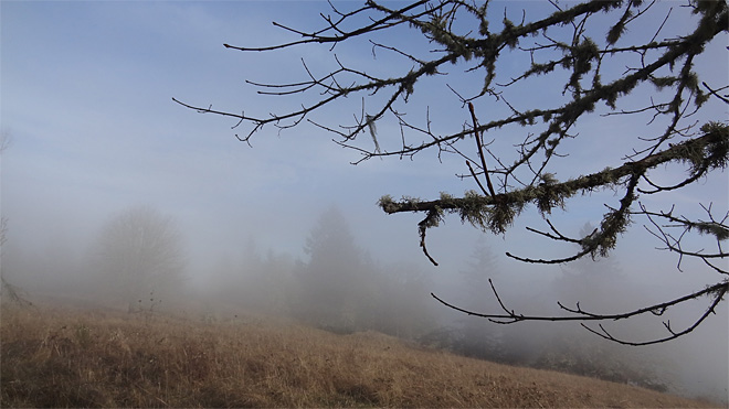 Freezing fog on Ridgeline Trail on January 22 2013 (2)