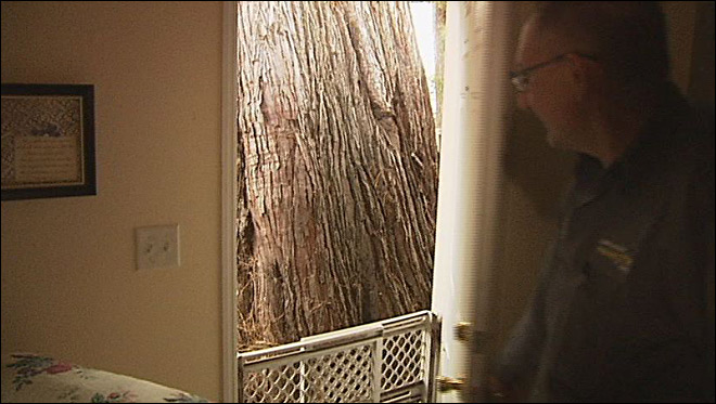 Giant tree trunk knocking on home's back door