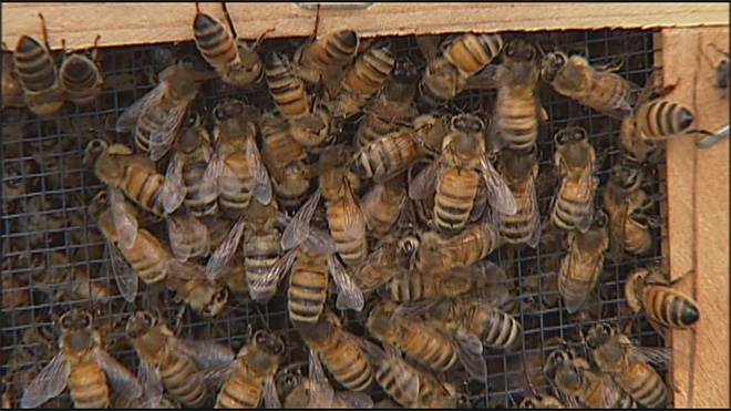 GloryBee hosts 38th annual weekend on saving hives00
