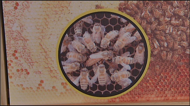 GloryBee hosts 38th annual weekend on saving hives04