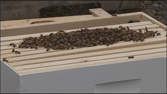 GloryBee hosts 38th annual weekend on saving hives07