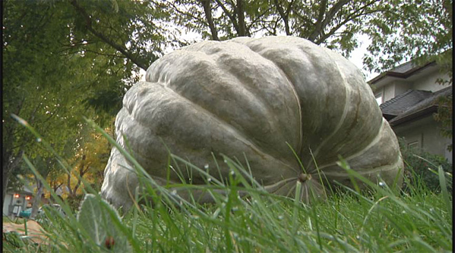 Heaviest squash in Oregon history (1)
