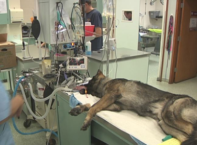 K9 Helix gets a root canal (2)