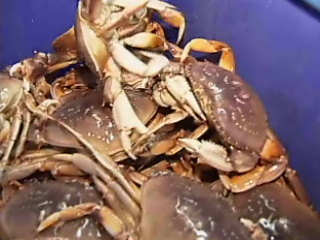 Oregon crab exports to China: 'That hurts'