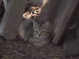 Mobile home park overrun with feral cats