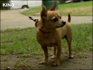 Dog vanishes; reappears after eating meth