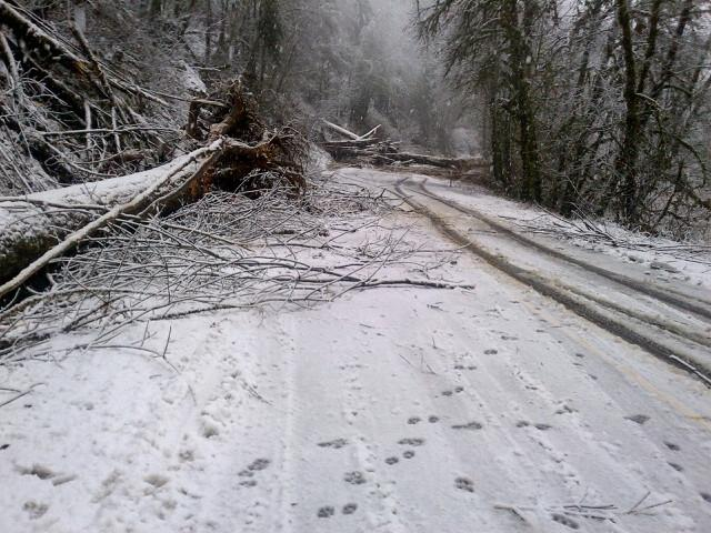 Landslide blocks Oregon Highway 126 (2)