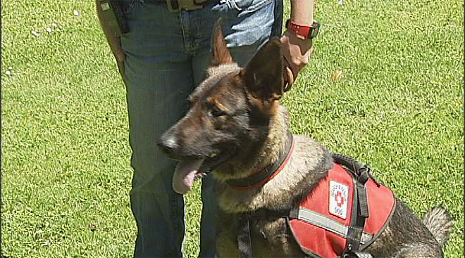 New K9s join search and rescue team
