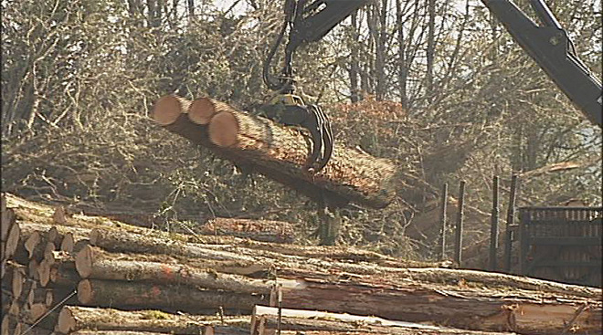 Bill allowing more logging on Oregon public lands advances