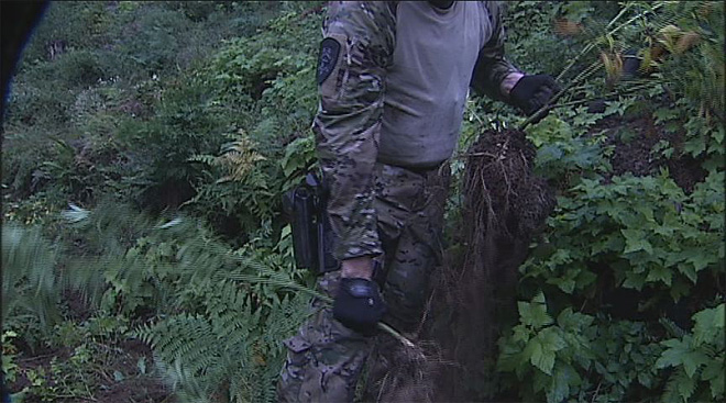 Marijuana grow operation bust in the Willamette National forest - 21