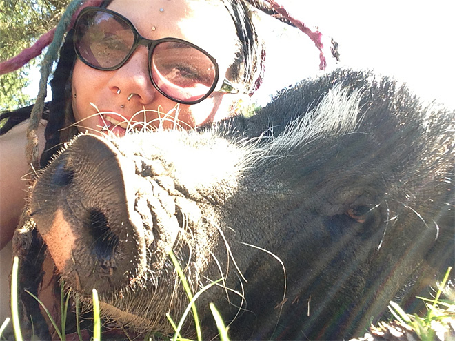 Pet pig back home after spending night alone