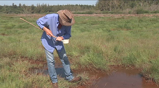 Work begins to control Bandon Marsh mosquitoes
