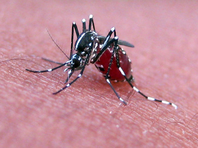 West Nile infects Lane Co. resident, 3rd case for Ore. this year