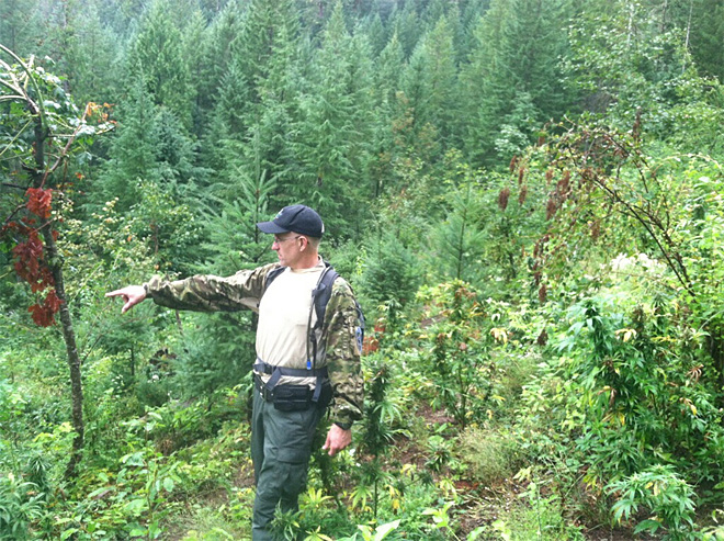 Multi-agency raid on grow-op in Willamette National Forest