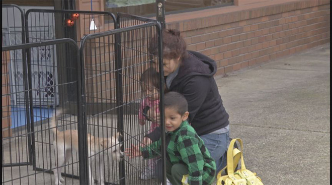 New shelter, Lucky Paws, takes in un-adopted dogs