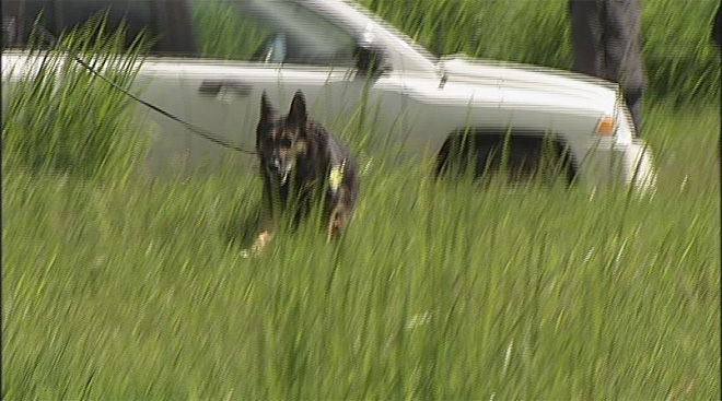 Oregon Police Canine Association training April 30 (10)
