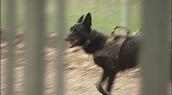 Oregon Police Canine Association training April 30 (17)
