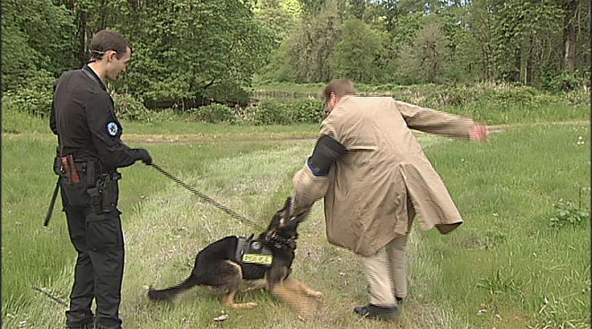 Police dogs practice taking a bite out of crime
