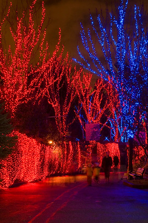 Oregon ZooLights (11)