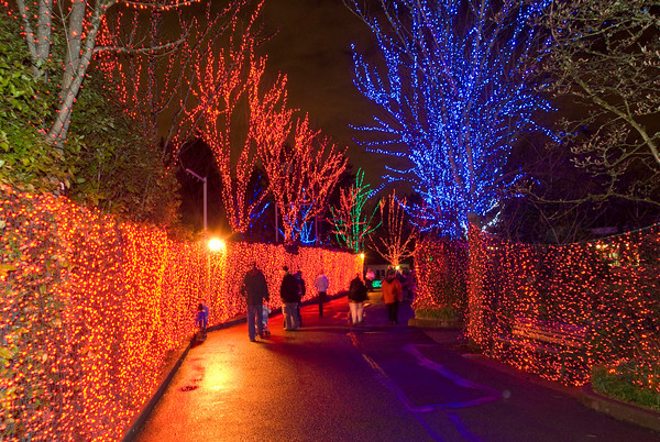 Oregon ZooLights (5)