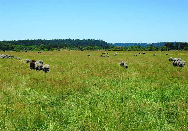 Dozens of sheep in Oregon dead in heat