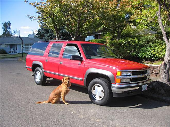 Photos using a dog to model the vehicle 1