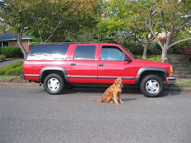 Photos using a dog to model the vehicle 2