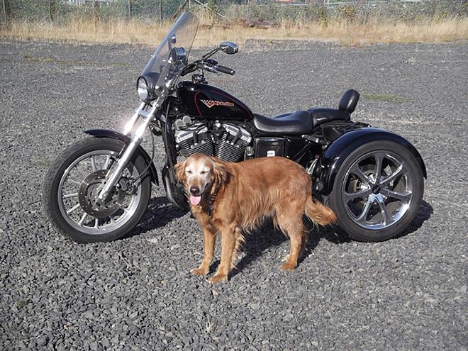 Photos using a dog to model the vehicle 3