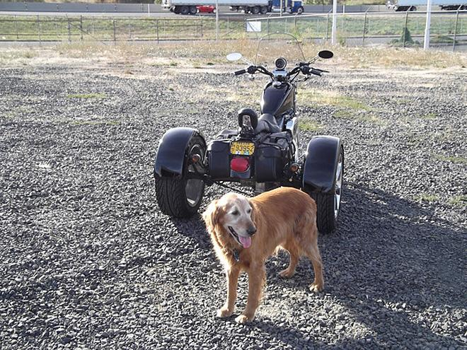 Photos using a dog to model the vehicle 4