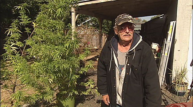 Pot plant stolen when grower goes inside to get out of the rain (4)
