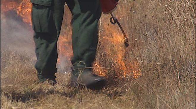 Prescribed burn in West Eugene Wetlands (5)