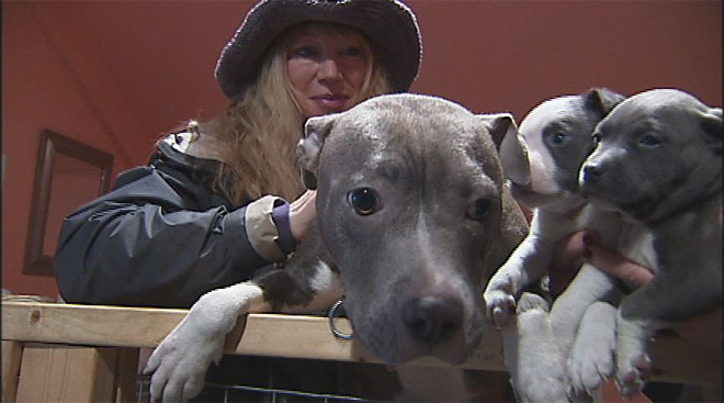 Pregnant Pit bull rescued: 'They take them to the shelter and dump them'