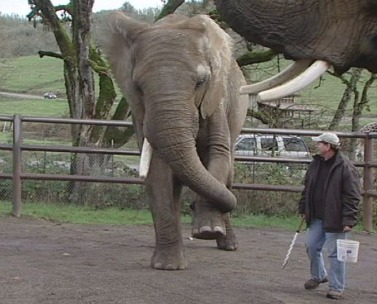 Animals at safari make Civil War picks, even fake injury