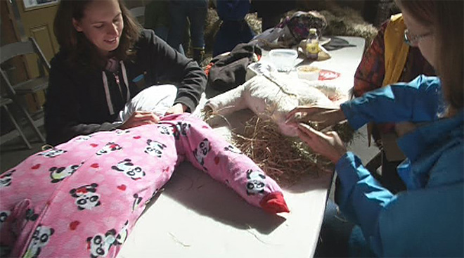 Scarecrow stuffing at Mt. Pisgah Arboretum