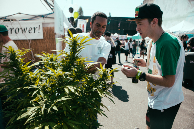 Seattle hosts the US Cannabis Cup