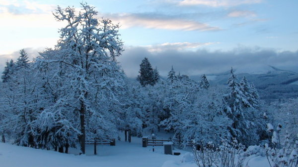 Snow Dec 7 2013 by Younews user mknokey1