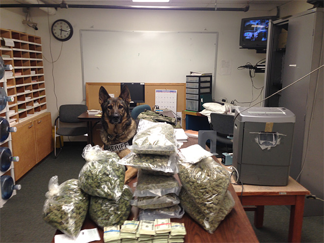 K-9 helps deputies find cocaine, 14 pounds of pot during traffic stop