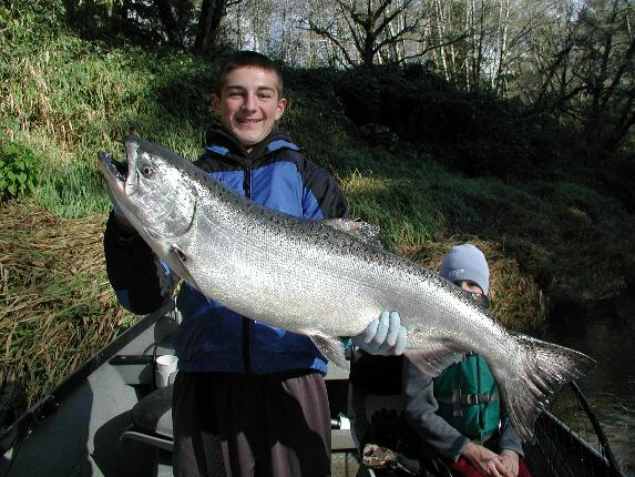 State Fish Chinook Salmon