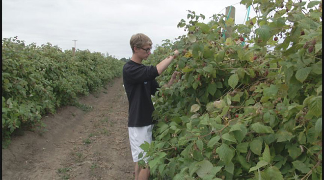 Summer vacation working on a berry farm: 'I had a great time!'