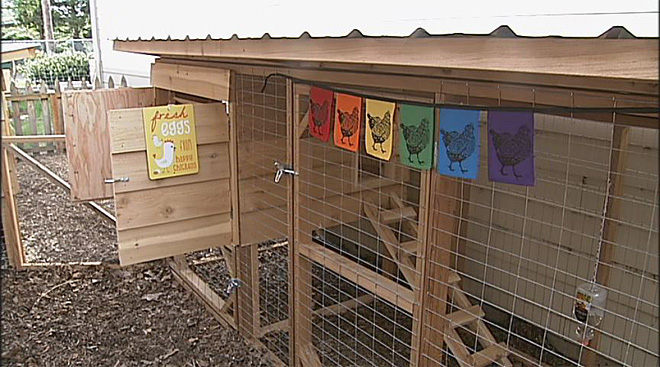 The Nest luxury chicken hotel (1)