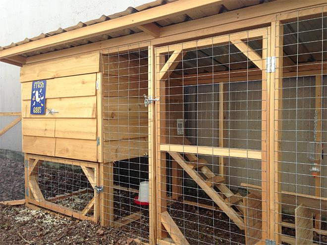 The Nest offers chickens a home away from home (4)