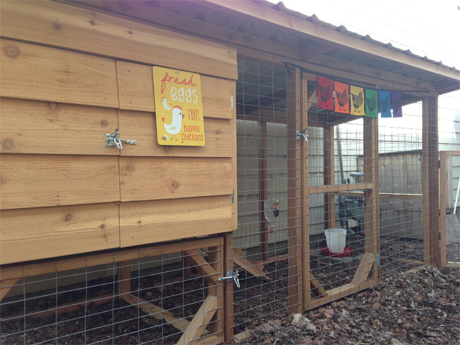 The Nest offers chickens a home away from home